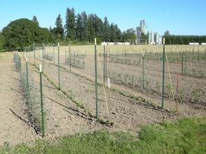 Posts, Rope, Crop Netting Bean Trellis System