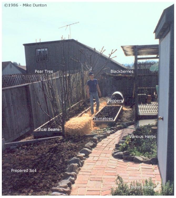 Planting our 1986 Suburban Garden